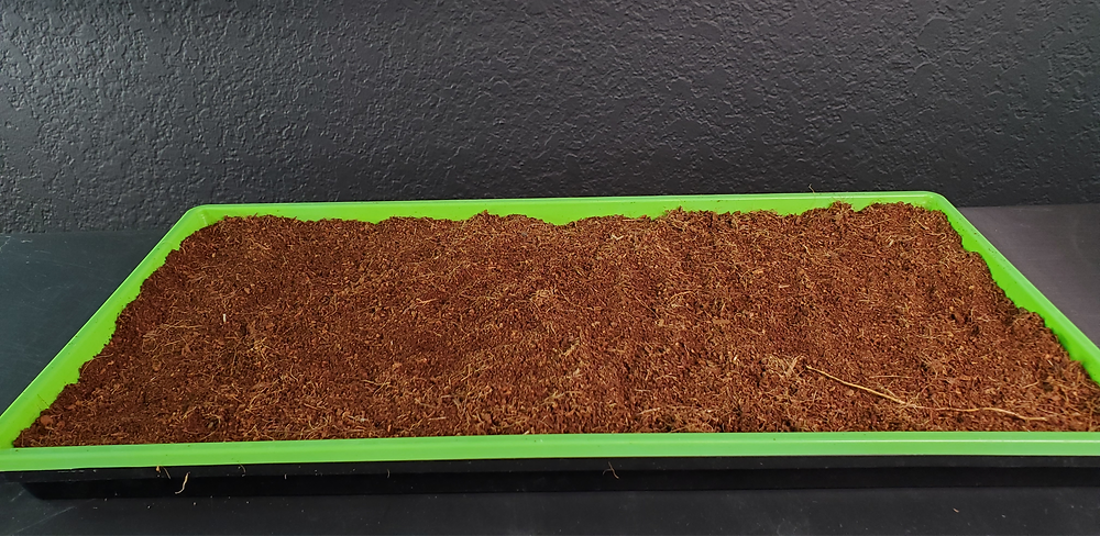 Slotted 1020 Microgreen Tray with filled with the Grow medium Cococoir for growing Hydroponic Microgreens