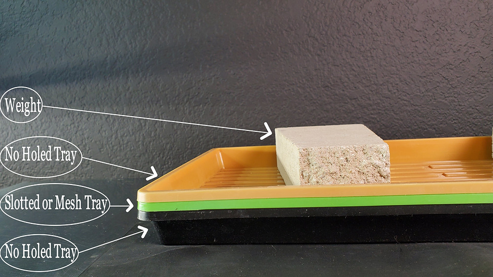 How to setup your Microgreens Trays for the Best Microgreens growth and germination