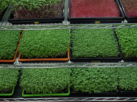 Professional Microgreens Grow Rack - Step by Step Build Guide