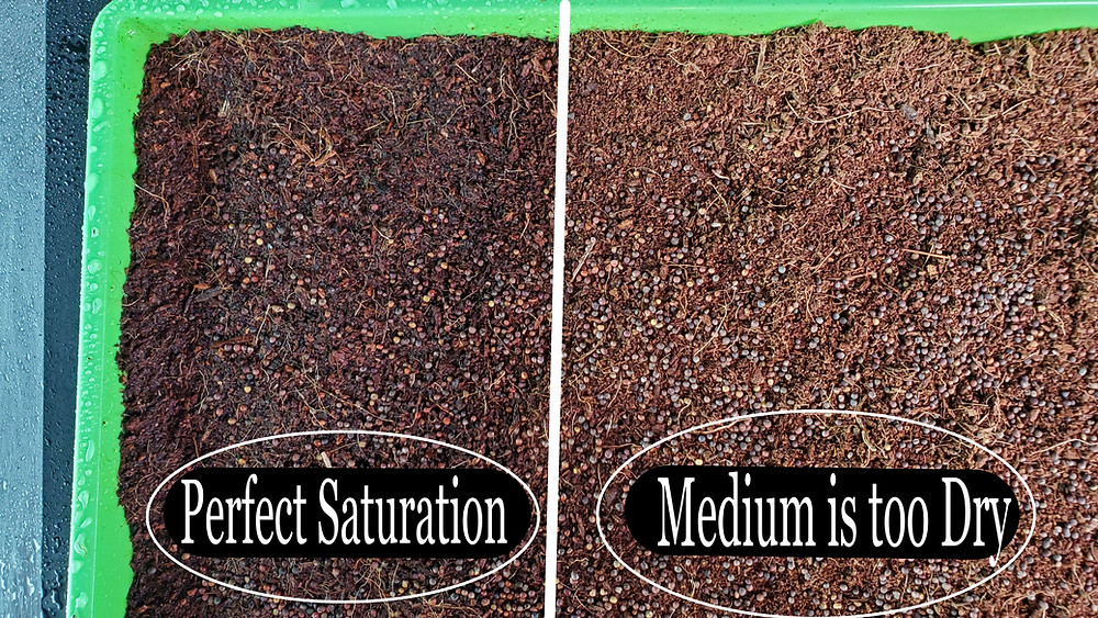 On The Grow, How to tell when your Grow Medium and Microgreens seeds need more or less water during germination.
