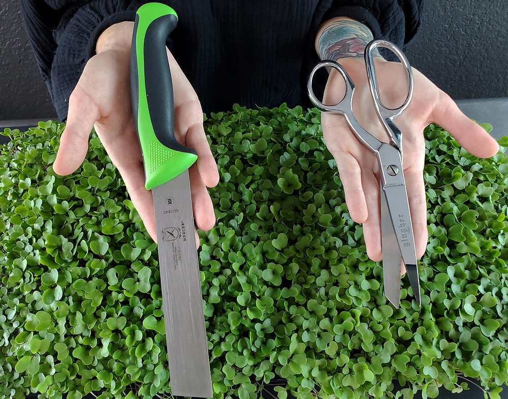 Mandi Of On The Grow Holding Harvesting Knife and Scissors for Microgreens