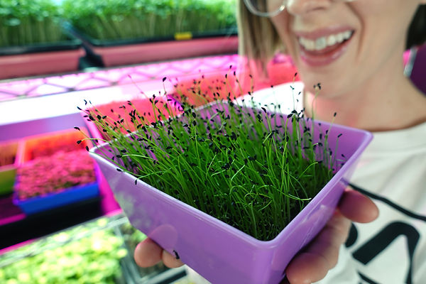 Mandi Warbington of On The Grow holding Bootstrap Farmer 5x5 Tray with Scallion Microgreen