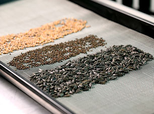 1020 reusable stainless steel mesh microgreen grow medium by on the grow, llc with radish microgreen seeds and mustard microgreens seeds and black oil sunflower microgreen seeds.JPG