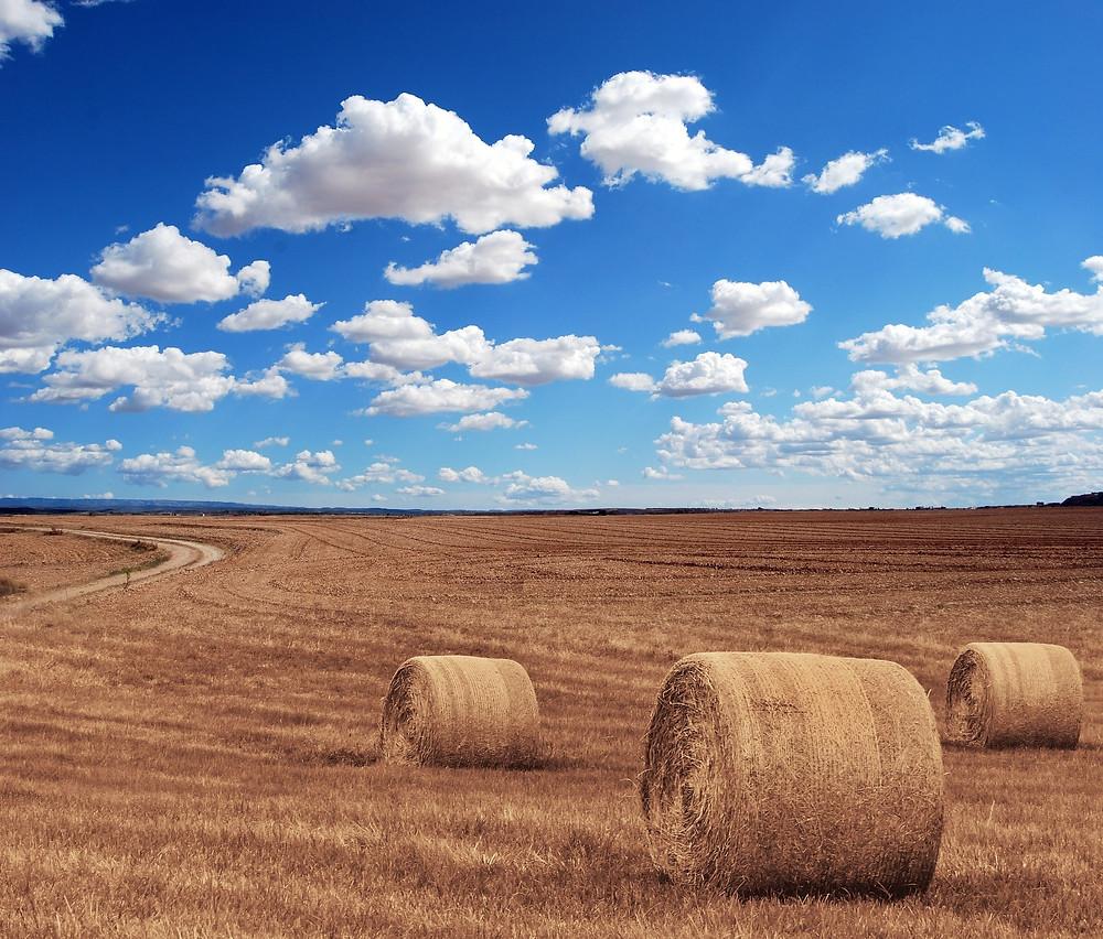 medidas urgentes agricultura y alimentacion