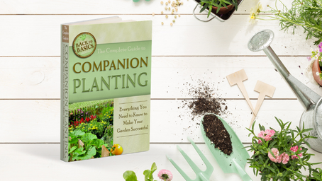 Companion Planting: From Seed to Harvest