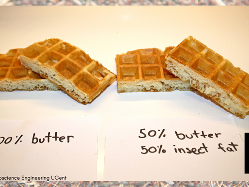 Waffles Made Of Insects Underway