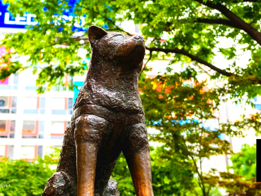 AKITA PREFECTURE ASKS REMOTE WORKERS TO LIVE IN THE LAND OF HACHIKO