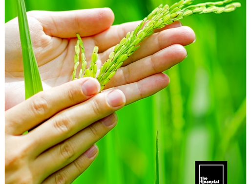 PALAY PRODUCTION UP BY 16.1%