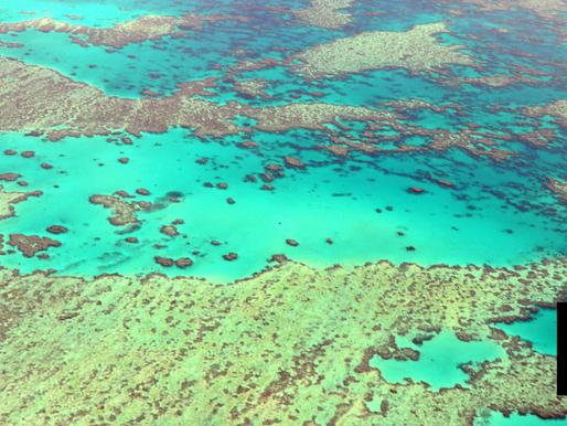 Great Barrier Reef Off Endangered World Heritage List