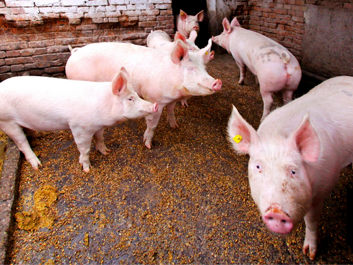 FARMERS URGED TO TAP INSURANCE PROGRAMS