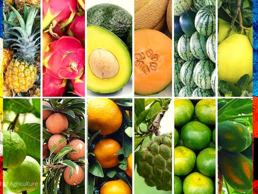 DA CHIEF URGES PUBLIC TO BUY LOCAL FRUITS FOR NOCHE BUENA