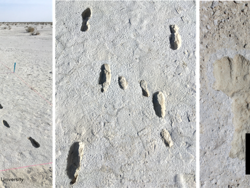 Footprints Show Humans It To North America 23,000 Years Ago