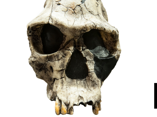 AGE OF CONTROVERSIAL HOMO ERECTUS SKULL CONFIRMED AT 1.9M YEARS