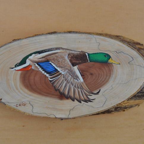 duck 17.jpg