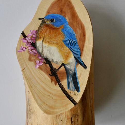 eastern bluebird.jpg