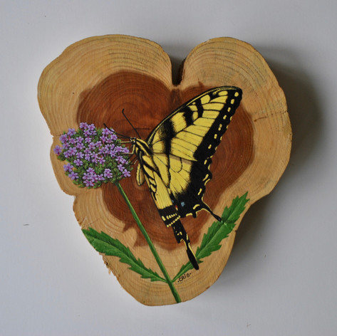 eastern tiger swallowtail.jpg