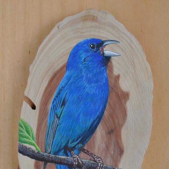 bluebird 17.jpg