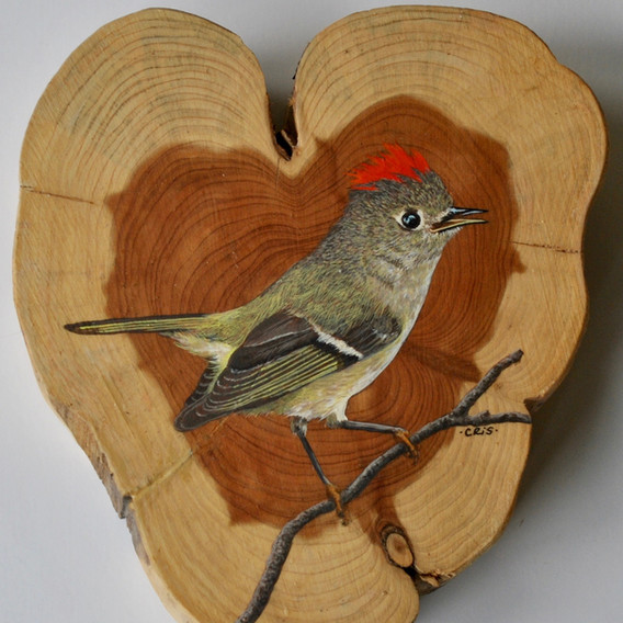 ruby crowned kinglet.jpg