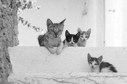 Katzenfamilie_B_P1330577
