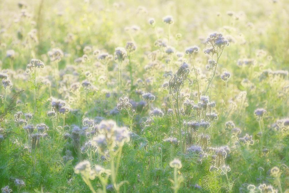 Flower_Power_P1250641