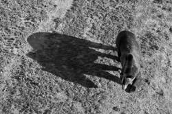 Bear_1664-2