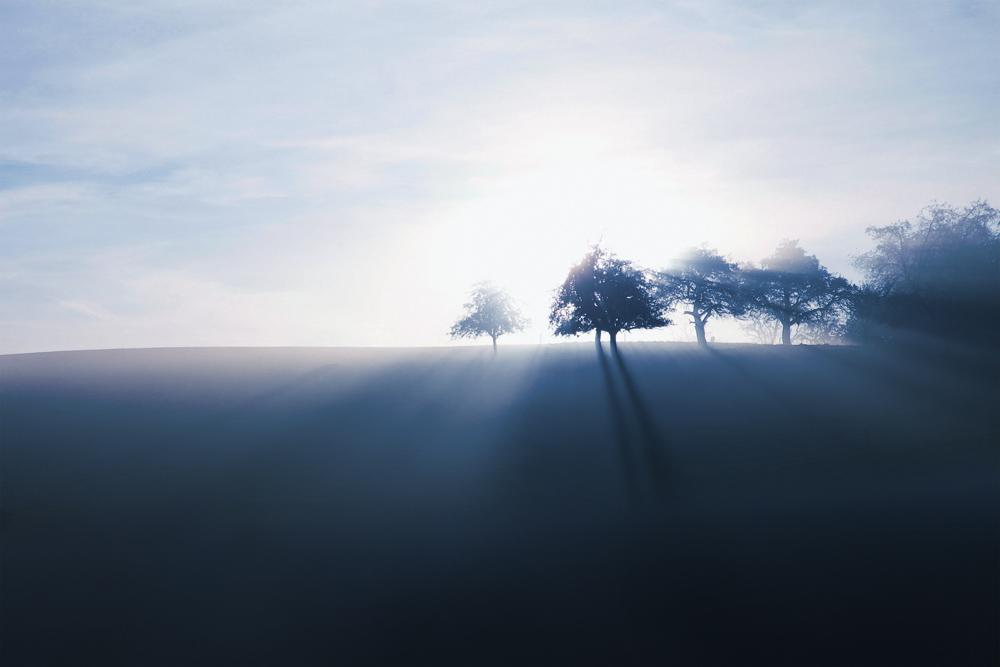 Blue_Trees_0426