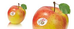 Goldkiss Labels