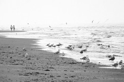 Nordsee_P1290937