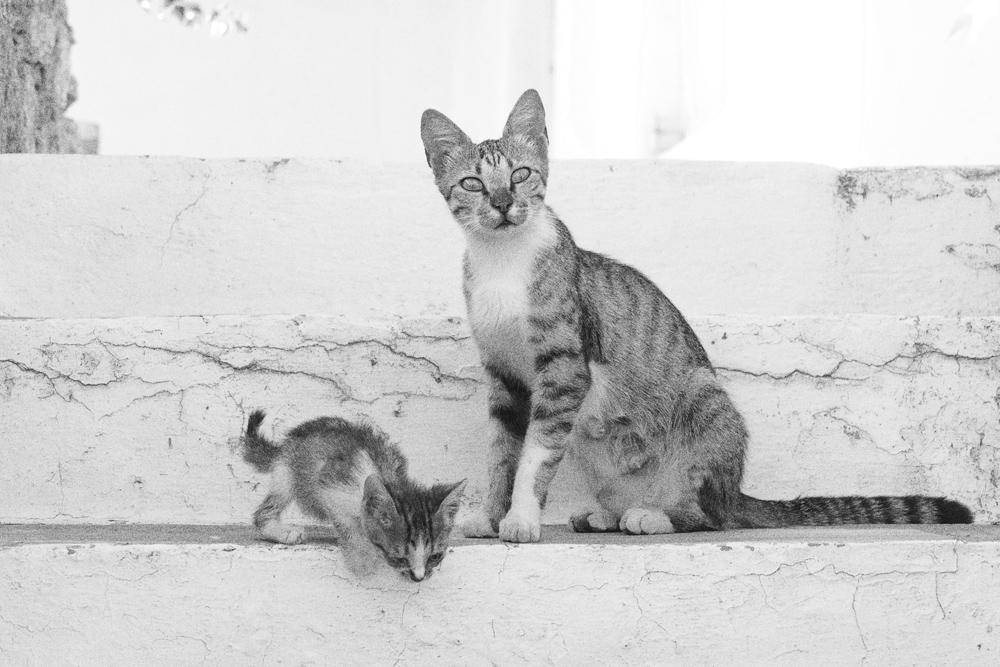 Katzenmutter_Kind_P1330539