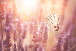 Schmetterling_8302