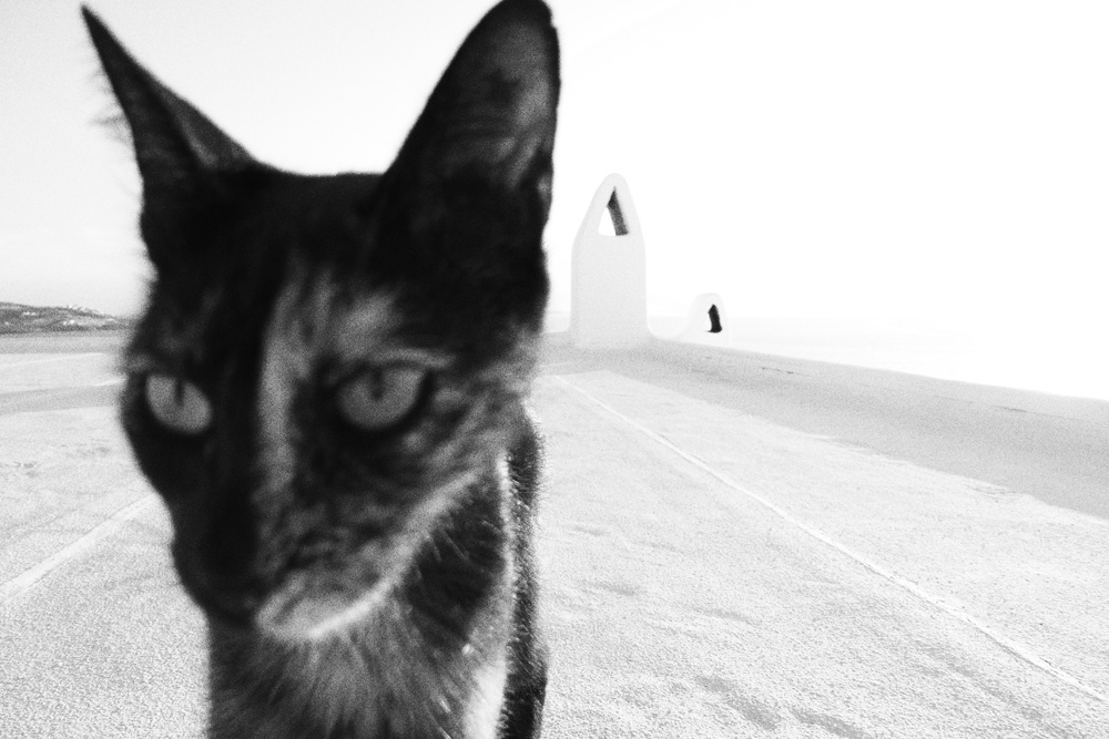 Katze_P1020525