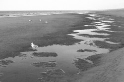 Nordsee_P1290926