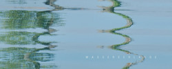 Wasserschlange.jpg