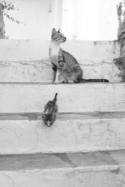 Katzenmutter_Kind_P1330540