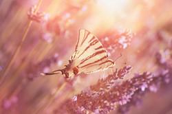 Schmetterling_8226