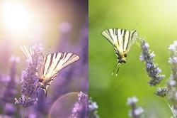 Schmetterling_8744_8757