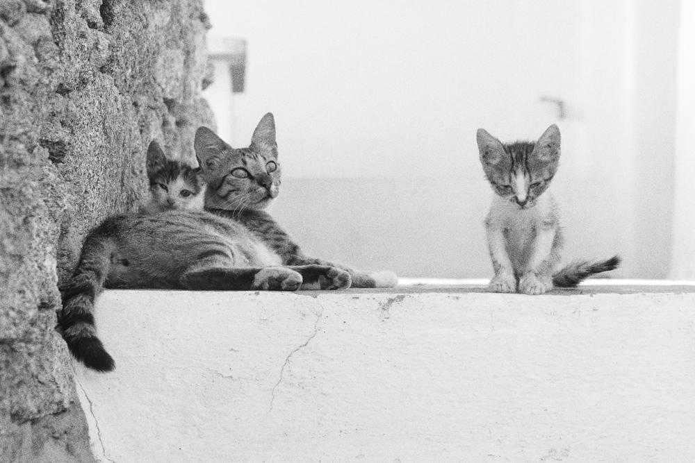 Katzenfamilie_P1330547