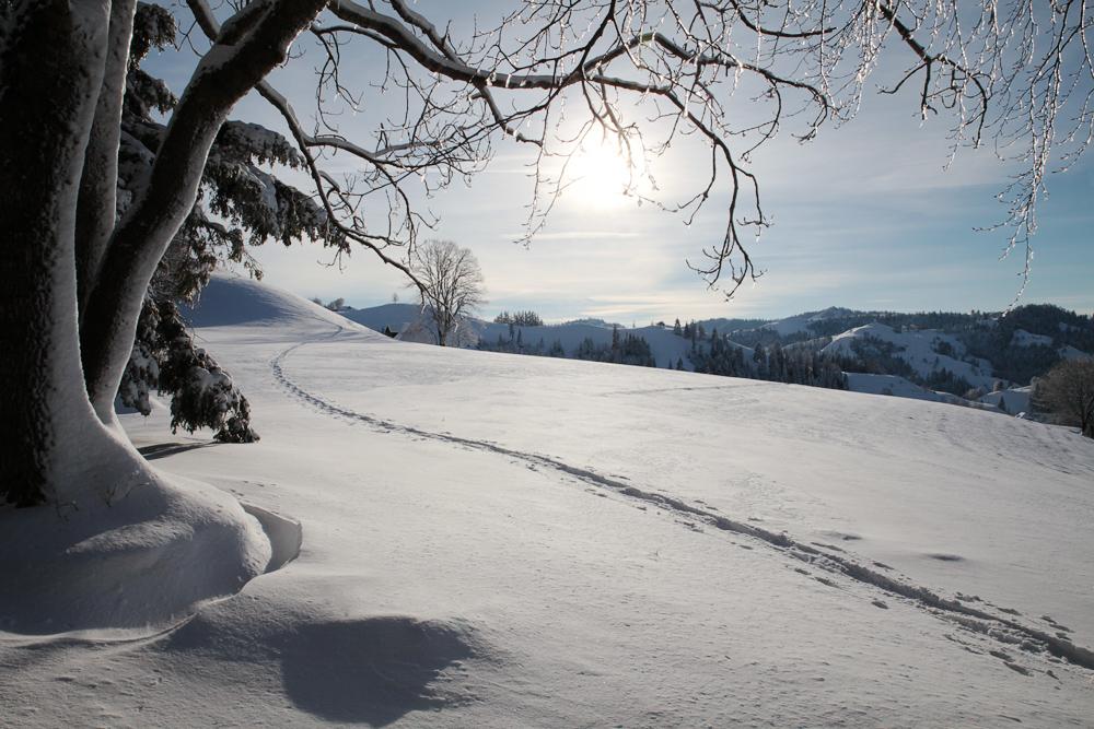 Spuren_im_Schnee_3772