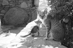 Katzenfamilie_P1330457