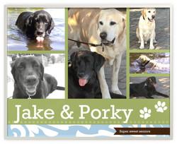 Jake & Porky 13 /11 yrs