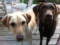 Maple & Sierra 4 / 3 years