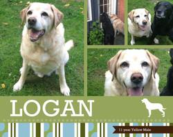 Logan 11 years Yellow Male