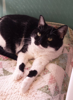 - adopted 9/12/21! Went to live with Rudy a previous cat from our shelter!