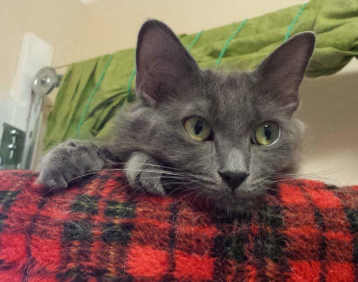 Lydia-Adopted May 2017
