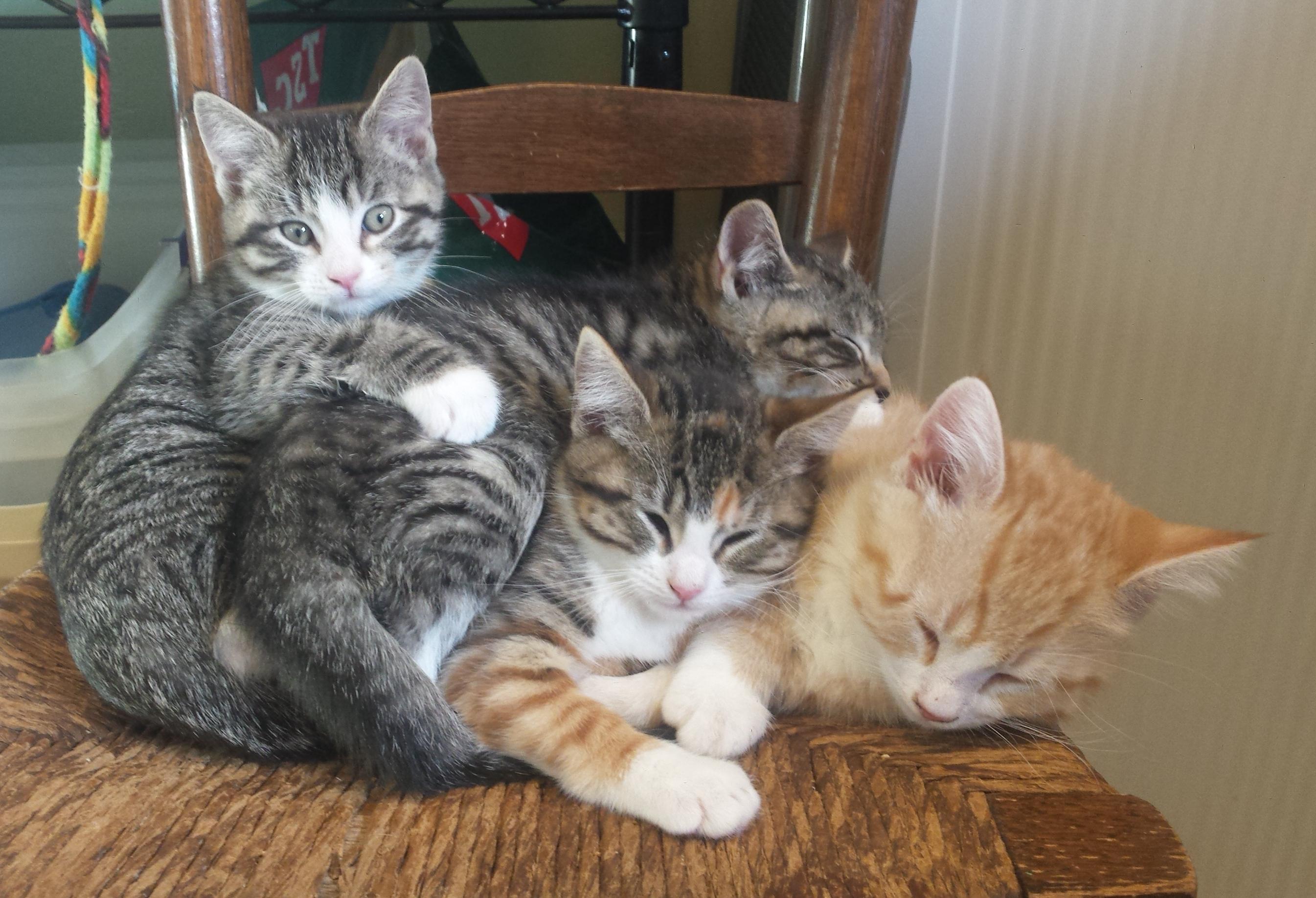 Yvette's Kittens - Adopted