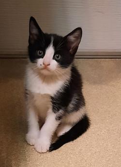 Kitten Sindi