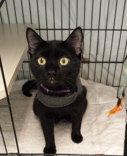 Inky - Adopted June 2020