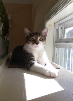 Willis - Adopted