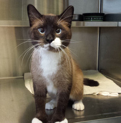 Freddie-adopted April 2019!