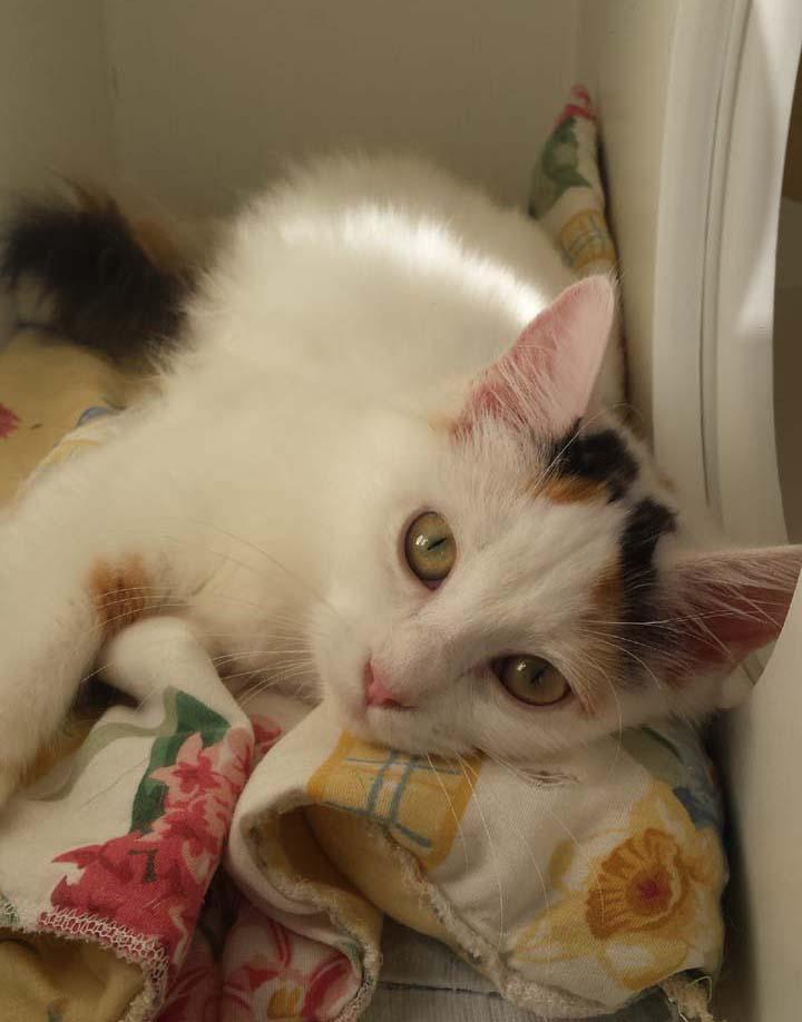 Fanny - Adopted Nov 2017